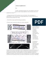 Biologia Celular de Fungos Filamentosos