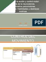 Bases de la acción y control motor