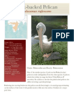 brown pelican copy