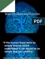 Lecture 8 Brain Structure