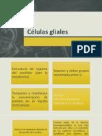 Glia Astrocitos