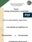 4 Procariotas y Eucariotas