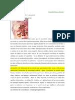 Sinusitis Biodescodificacion