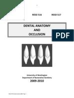 Dental Anatomy & Occlusion