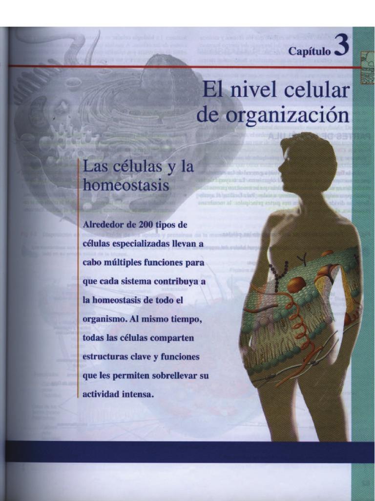 Excelente El Capítulo 9 De Anatomía Y Fisiología De Libro De ...