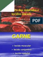 Aula 3- Estrutura Muscular