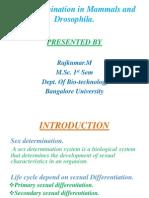 Sex determination in Mammals and Drosophila