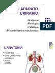 El Aparato Urinario (1)