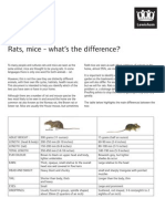 Difference Between Rats and Mice Information Sheet