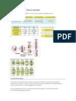 Las fases de la meiosis.docx