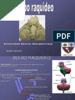 bulboraquideo1-090713194529-phpapp02