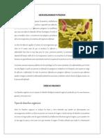 MICROORGANISMOS PATÓGENOS.docx