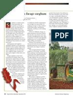 Forage Sorghum Options
