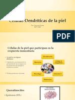 Células Dendríticas de la piel