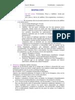 Apuntes de zoología - respiración.pdf