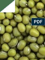 Makalah Penelitian Pertumbuhan Kacang Hijau
