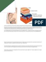 Anatomy for Acute Epidural Hematoma