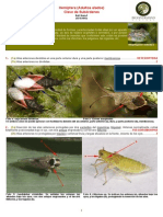 clave subordenes hemiptera.pdf