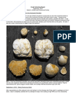 Fossil Collecting Report Sept 2010
