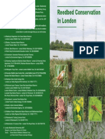 Reedbed Conservation in London