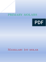 Primary Molars