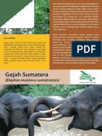 Gajah Bahasa All