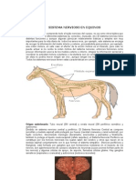 Sistema Nervioso Equino
