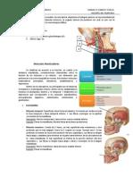 musculosmasticadores-111013165159-phpapp01