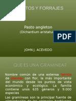 23408540 Pasto Angleton