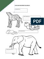 Colour and Describe the Animals