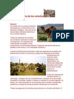 Ineformacion Del Camello