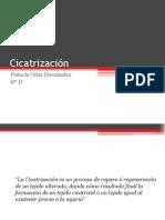 02. Cicatrización...Fabiola Ortiz H. 8D