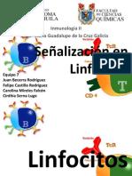 Señalización en Linfocitos