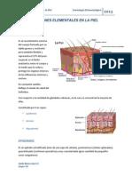 LESIONES ELEMENTALES EN LA PIEL.docx