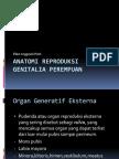 Anatomi Reproduksi Genitalia Perempuan