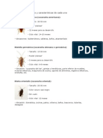 Tipos de cucarachas y características de cada una