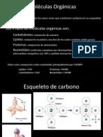 UNIDAD 3 - MOLECULA ORGANICA.ppt
