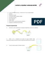atividade 1_ como extrair e visualizar moléculas de DNA
