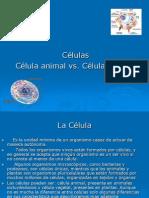 Celula Vegetal y Animal