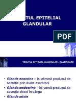 epitelial_2
