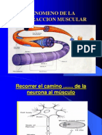 Fenomeno de La Contraccion Muscular