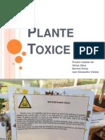 Plante Toxice