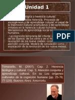 Los origenes de la cognición humana Presentación. Tomasello
