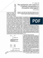 The Mechanism and Control of P Element Transposition in Drosophila Melanogaster