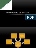 Enfermedades Del Intestino.