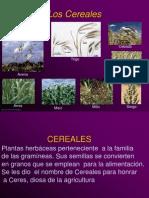 Tecnolog+¡a de Cereales 1a