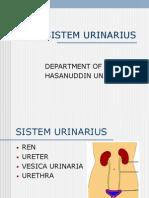 Sistem Urinarius