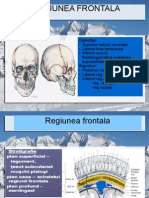 regiunea frontala