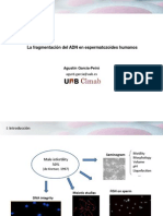 Agusti Garcia Peiro - La fragmentacion del ADN en espermatozoides humanos - II Simposio Reproducción Asistida Quirón