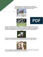 Animales Utilizados en La Industria